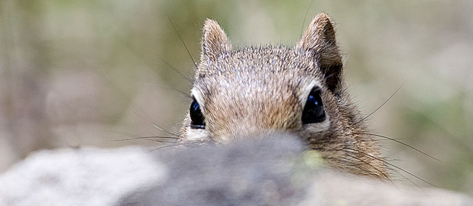 Squirrel_Banner_688x300